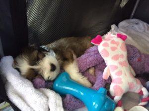 sleeping in the car 300x225